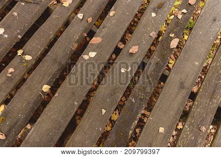 Autumn Leaves and pine fir over wooden background.With copy space outdoor rustic