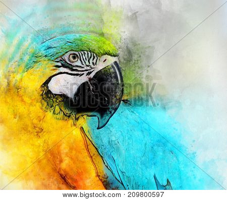 Blue and yellow parrot on white background. Watercolor digital painting.