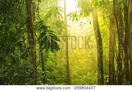 Tropical rain forest with morning sunlight shine through the dense, Selangor, Malaysia