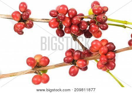 coffee cherry isolate on white background.Close up