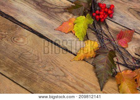 Thanksgiving Background With Ripe Rowan Berries Door Wreath, Copy Space