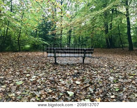 Isolated park bench in peaceful autumn woodland