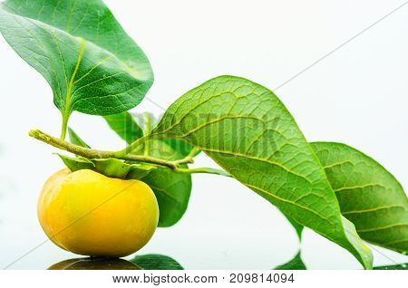 Fresh ripe persimmon with branch and leaves isolated on white background.