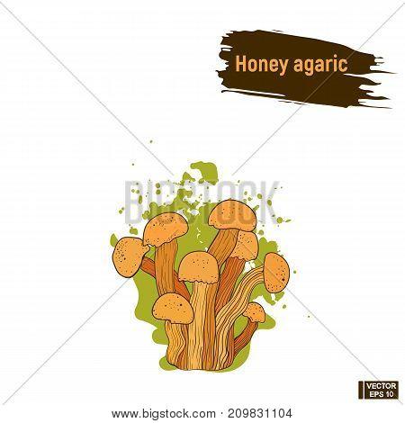 Colored Mushrooms, Honey Agaric Sketch.