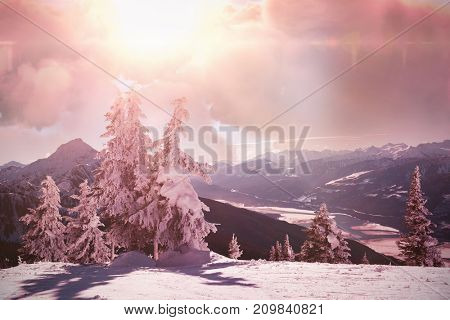 Scenic view of brown storm cloud against pine tree covered with snow during winter