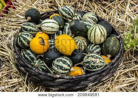 Rustic still life from decorative colorful pumpkins lying in a wicker basket on the hay.
