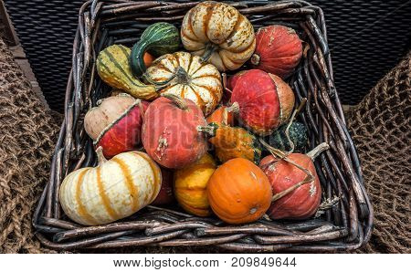 Rustic still life from decorative colorful pumpkins lying in a wicker basket.