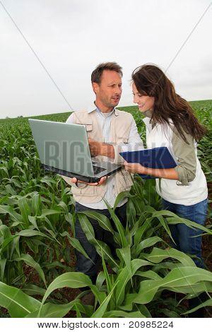 Reserachers working in corn field