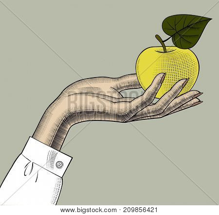 Woman's hand with an apple. Vintage engraving stylized drawing