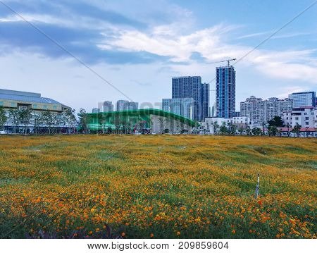 Common Modern Business Skyscrapers, Yellow Flower