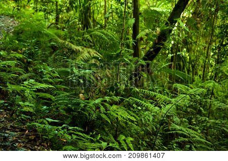 Landscape view in tropical green forest.