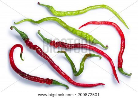 Bangalore Whippet's Tail Chile Peppers, Paths, Top View