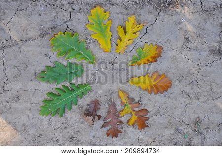 Life cycle of leaves on the ground. Color of leaves in autumn from green and yellow to brown