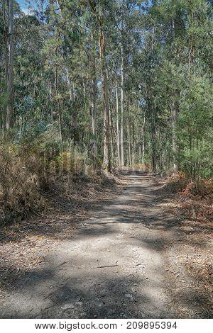 Pilgrim trail between Pedra Furada and Pereira on the Camino de Santiago, Portugal