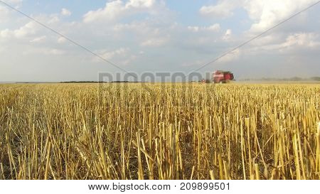 Wheat harvesting shearers. Wheat harvesting agriculture. Harvesting video wheat bread steadicam shot motion