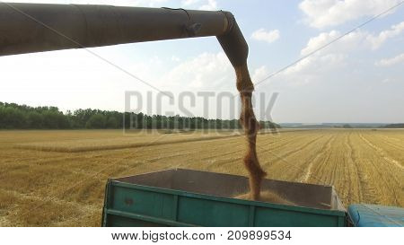 Combine harvester unloading architecture grain into wagon. Combine harvester grain