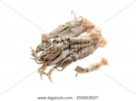 Raw, uncleared squid isolated on white background closeup