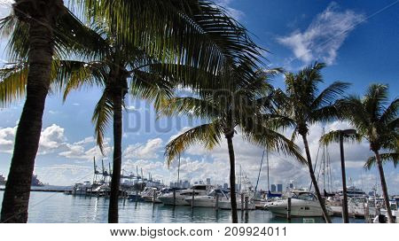 Palm trees at Marina Bay of Miami, Florida