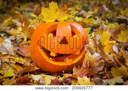 Funny halloween pumpkin on autumnal leaves