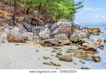 Natural background with green sea, tree, stones and forest