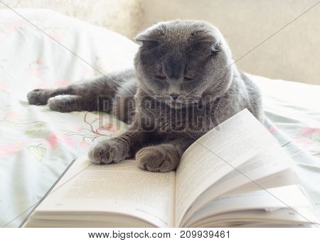 smart cat reading a book on a bed