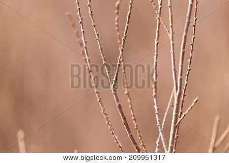 bare branches of a tree in nature