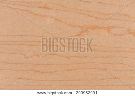 Pine wood texture with natural pattern. Hi res photo.