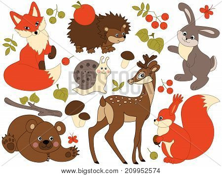 Vector set of cute wild forest animals. Set includes fox, deer, bear, hedgehog, squirrel, snail and rabbit. Vector woodland animals. Forest animals vector illustration
