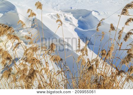 Large snow drifts and dried reeds on a winter sunny day