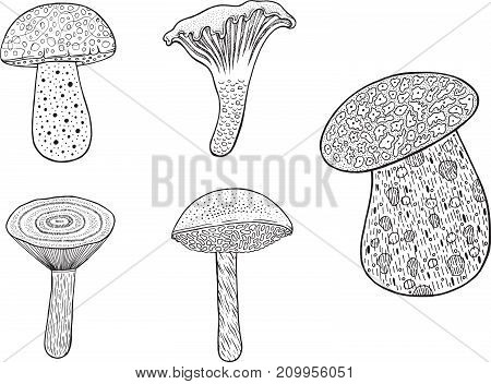 Edible mushrooms - set. Doodle cartoon coloring page for adults - collection.