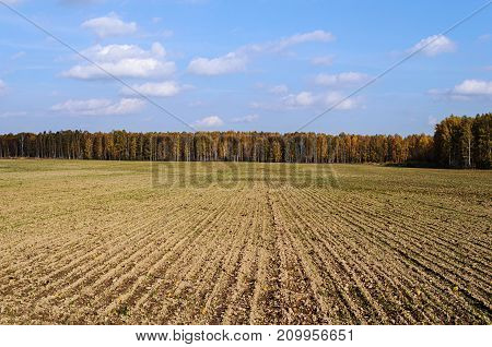 Plowed field against of an autumn forest background sunny day