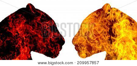 Panthers of fire look at each other on a white background , isolated objects, predators, a symbol of strength and beauty