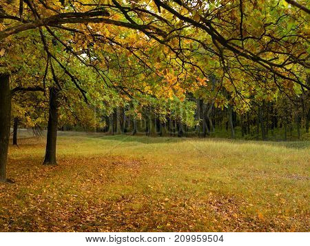 Colorful autumn landscape with yellow and trees. Oak forest. Natural background