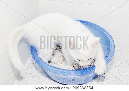 Cat Toilet White Kitten Cuteness Clean Blue
