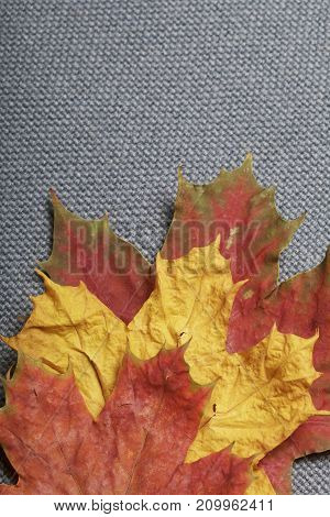 Fallen Autumn Leaves Of Different Colors Against The Background Of Their Gray Cloth.