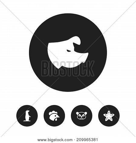 Set Of 5 Editable Zoology Icons. Includes Symbols Such As Rooster, Sea Star, Sow And More