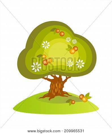 Picking apples. Blooming apple tree and fallen apples. Vector EPS 10, cmyk