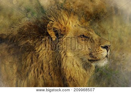 Watercolor Digital Painting Of Lion Head vintage effect