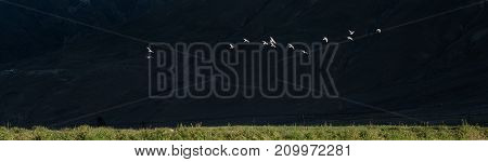 Flock of white birds flies freely against a dark background below is a green grass a metaphor for the vastness of space.