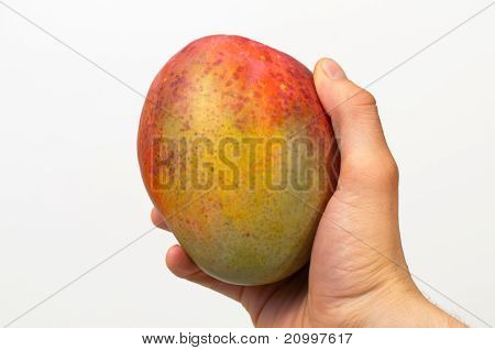 Right Hand holding a ripe mango