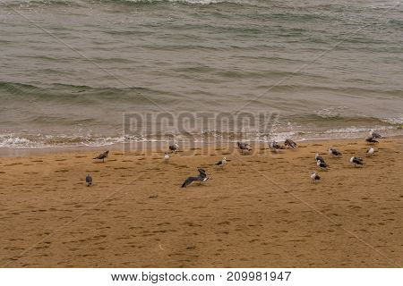 Seagulls Gathered On Sandy Beach