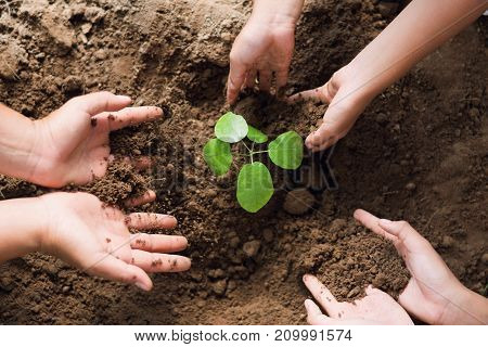 people hand group help plant trees to help reduce global warming