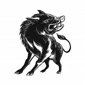 Scratchboard style illustration of an angry wild hog feral pig wild boar or razorback roaring viewed from low angle in front done on scraperboard on isolated background. poster
