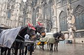 horse carriage near St. Stephan Cathedral Vienna Austria poster