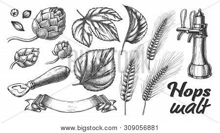 Hop Leaves Barley Wheat Rye Ear Opener Set Vector. Bar Pub Beer Crane Tap And Tool For Open Glass Bo