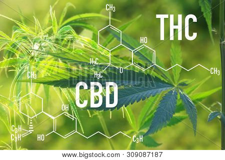 Medical Cannabis And Cannabidiol Cbd And Thc Oil Chemical Formula. Chemistry Structure Of Marijuana