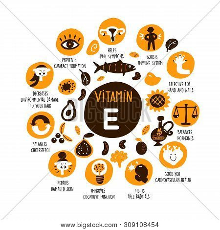 Vector Cartoon Illustration Of Vitamin E Sources And Information About It Benefits.