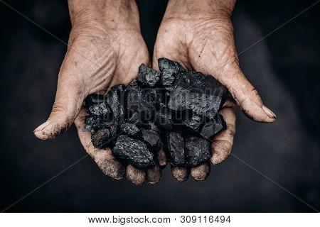 Miner Holds Coal Palm. Concept Mining. Top View.