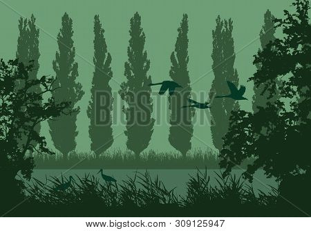 Realistic Landscape Illustration With Wetlands And Swamp. Reeds And Green Grass With Trees, Poplars