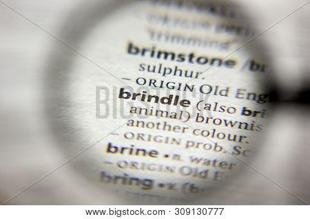 Word Phrase Brindle Image Photo Free Trial Bigstock